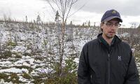 Tusentals hektar skövlade av vandringsälg