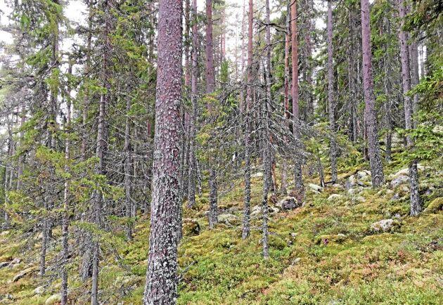 Det är inte olagligt att avverka nyckelbiotoper, men man måste först ansöka om samråd med Skogsstyrelsen. Men att sälja virke kan bli svårt.