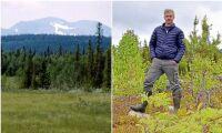 Klart: Skogsägare ersätts för att spara fjällnära skog