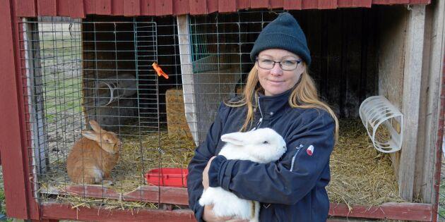 Trakasserad kaninuppfödare fick nog – startar kampanj