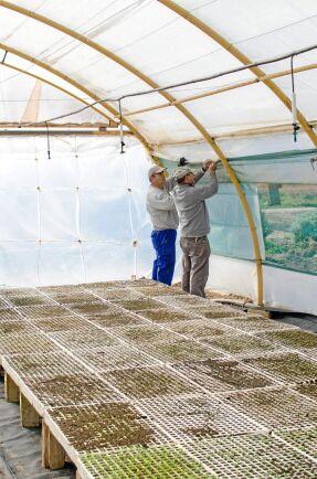 Manuel Martín, närmast kameran, och Mariano Saavedra lagar växthuset där det senare ska dras upp persilja och basilika.