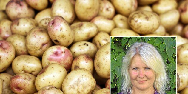 """""""Skippa utseendefixering av potatis"""""""