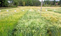 Hårdare straff för brott mot växtförädlarrätten
