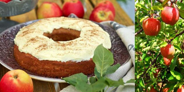 Äppelkaka solrosfrön och färskostglasyr