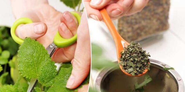 Odla ditt eget husapotek! 4 läkande växter du kan driva upp själv