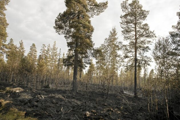 Sommarens skogsbränder i bland annat Ljusdal drabbade ett flertal skogsägare.