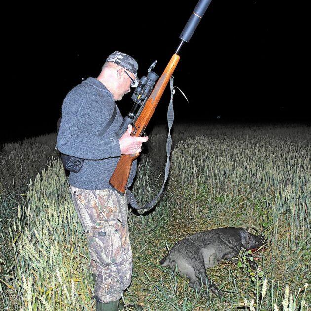 ATL var med när Leif Hellman sköt sitt tionde vildsvin den här sommaren.