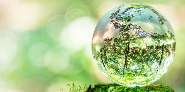 Växterna är planetens tungviktare