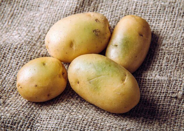 Äta eller slänga? Så ska du göra med grön potatis!
