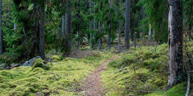 Målet: Omarrondera 10000 hektar skog per år