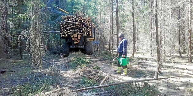 Virkesbrist hotar efter svår skogstorka