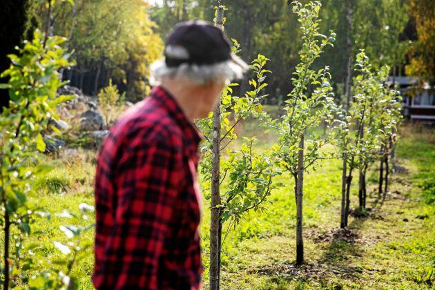 I framtiden blir det cider och must från de över 120 äppelträd av olika sorter som Gunnar har ympat och planterat.