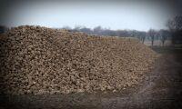 EU-beslut: pengar tillbaka för sockerbetsodlare