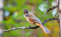 Birdlife överklagar lavskrikedom
