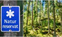 Svårt jämföra skogsskydd i Sverige och Finland