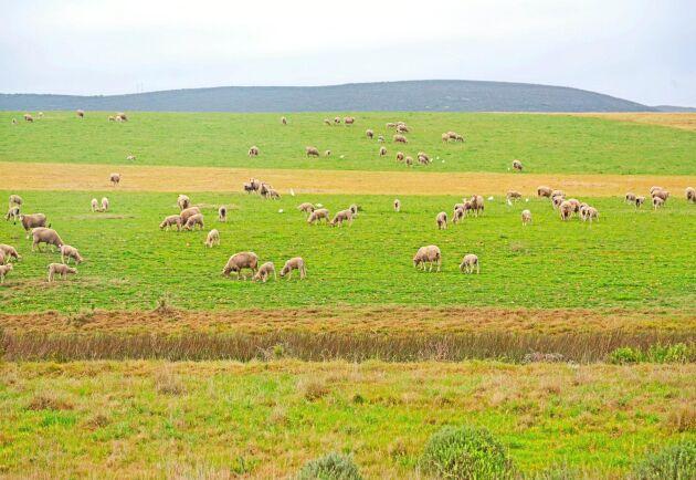På nätet cirkulerar en lista på 195 sydafrikanska farmer som sägs stå på tur att exproprieras av staten. Arkivbild.