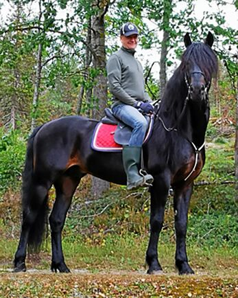 Hästföretagaren Gunnar Melander fokuserade på god arbetsmiljö och trygg hästverksamhet från början. Här med flerfaldiga mästaren Månprinsen.