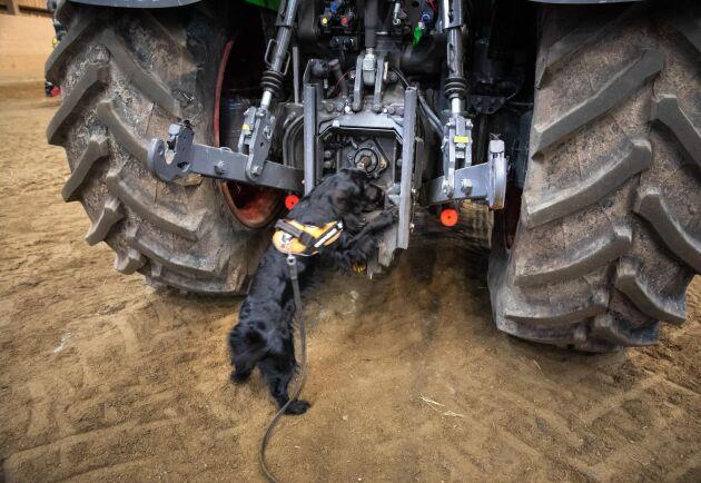 Ogräs kan spridas mellan fält via maskiner och på en traktor kan det finnas många skrymslen och vrår som måste sökas av.