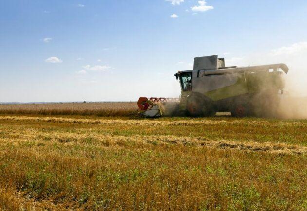 Sämre spannmålsskörd på grund av torkan och ett lägre etanolpris var negativt för resultatet.