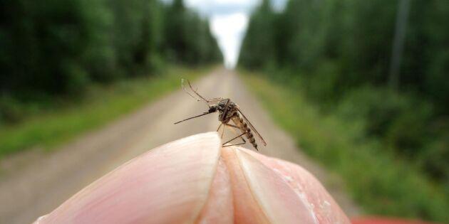 Bästa knepen som skyddar mot mygg