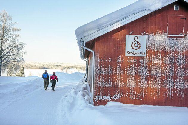 När inte mjölkproduktionen längre bar sig på gården Södra Svedjan beslöt paret Hellström att satsa på ost.