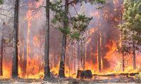 Skogsbranden i Småland inte under kontroll