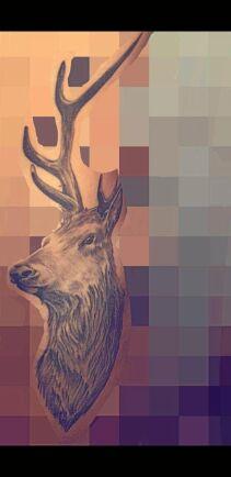 Vi har många hjortar vid gården, skriver Sofie Stolphage, därför fick en hjort bli motiv till en av hennes tatueringar.