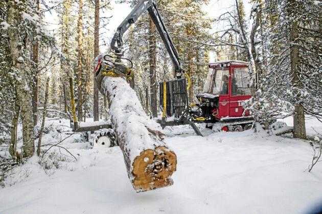 """Terri-entreprenören Alf Isaksson har fått det lite udda uppdraget att skota ut virke från en annan naturskog till den här. Det är stora gamla stockar, med rödlistade arter, som läggs som lågor i den """"nya"""" gammelskogen."""