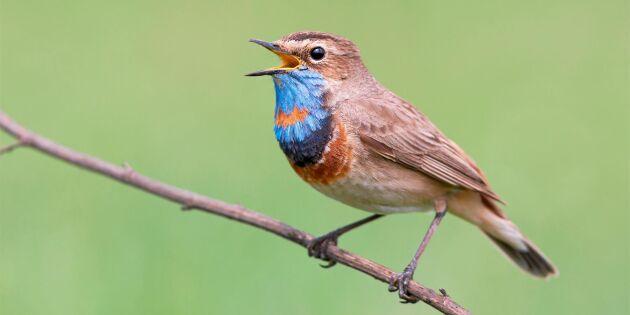 Här kan du skåda fåglar – bästa platsen i varje landskap