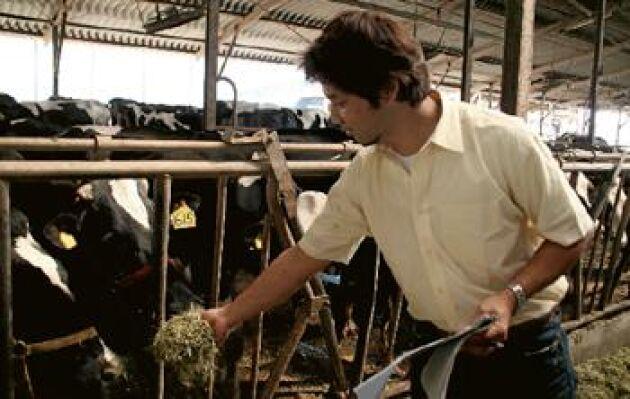 Yoshiyuki Hanzasas mjölkgård nåddes inte av tsunamin. Värst nu är att konsumenternas förtroende för japanska jordbruksvaror rasar och bönderna har svårt att sälja sina produkter. Foto: Lena Johansson