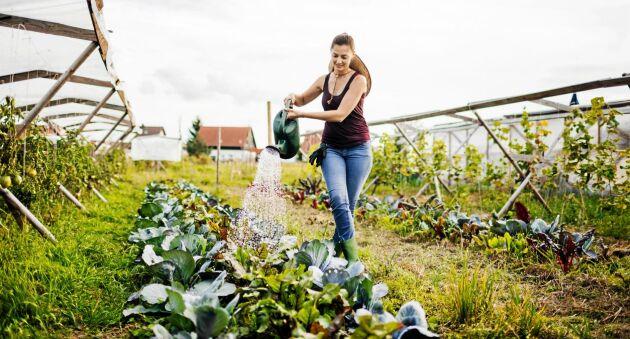 EcoFlush är ett praktiskt och hygieniskt system för återvinning av toalettavfallets närsalter till jordbruket.