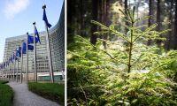 Nu diskuteras skogsfrågan i EU:s ministerråd