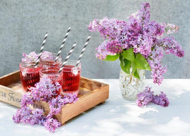 Syrénsaft – enkelt recept på hemgjord saft av blommande syrener