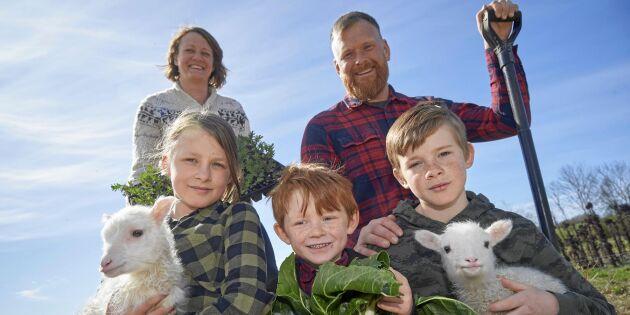 Familjen Widing har skapat en fristad för svenska lantraser – och hotade växter