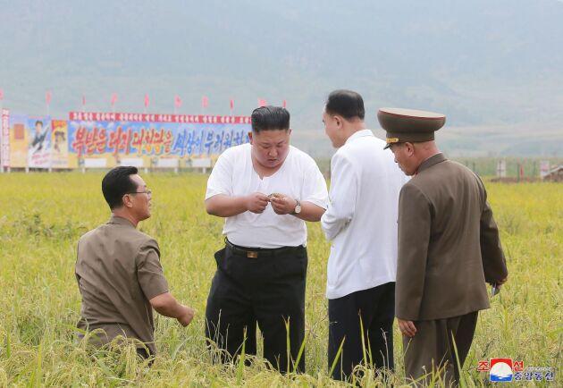 Nordkoreas ledare Kim Jong Un undersöker en översvämmad åker.