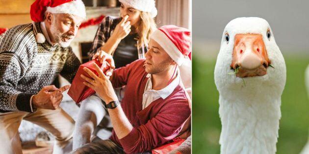 Ny metod! Jul utan strul – bli en mental gås
