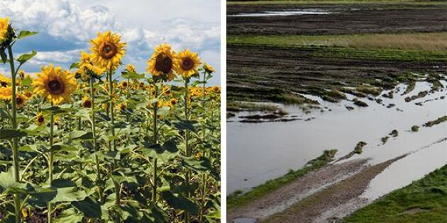 """Stora kunskapsluckor"" om lantbrukets klimatanpassnig"