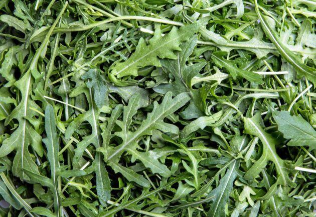Rucola hör till de grödor som drabbas hårdast av kålmalen. Arkivbild.