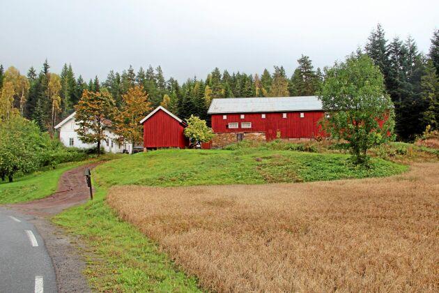 På Langerud liksom i resten av Norge var 2017 ett eländets växtodlingsår.