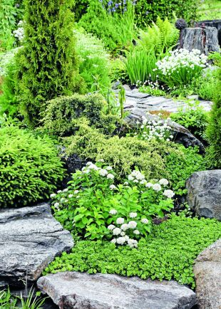 Bland stenarna blommar olika fetbladsväxter och spirea. I bakgrunden syns björnrot och vitblommande gräslök.