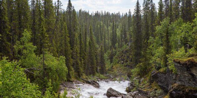 Skyddad skog inte spridningshärdar