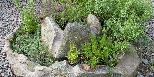Anlägg en örtspiral – smart odling på liten yta