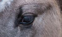 Döda hästar upptäckta på gård