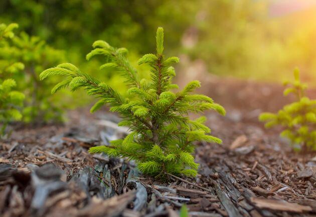 Skogssällskapet och närstående stiftelser utlyser 18,1 miljoner kronor till forskning och kunskapsutveckling om skog och naturvård.