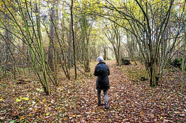 Plocka mat i skogen utifrån säsong och upptäck skogens mångfald. I den öländska skogen finns nötter, svamp, bär och annat ätligt i säsong.