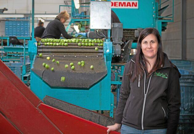 Evelien Vanlerberghes familjeföretag odlar brysselkål på 350 hektar. En del av brysselkålen når Sverige via en nederländsk grossist.