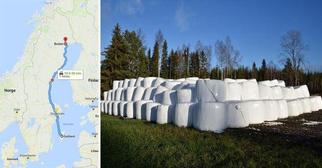 Kristoffer Nilsson kör flera gånger mellan Boden och Gotland för att leverera foder, en sträcka på 1165 kilometer enkel väg.