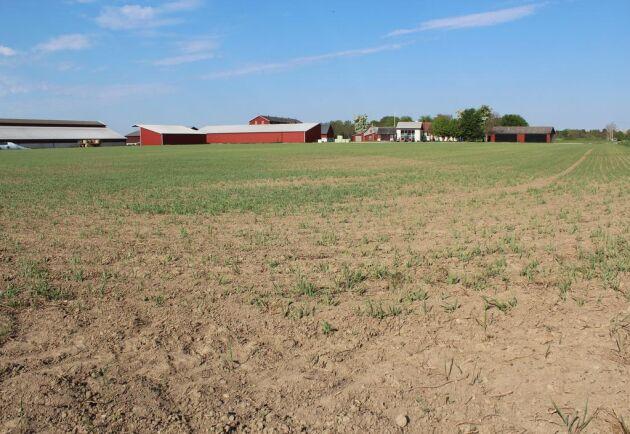På gården odlas i dag bland annat spannmål och majs.