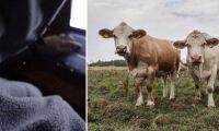 Djurrättsaktivister allt mer hotfulla