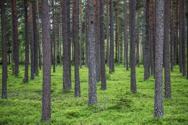 Klövviltstammarna kostar skogsbruket mycket stora belopp, enligt rapporten.